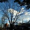 JR根岸線 横浜スタジアムの冬樹