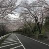 桜満ち溢れ乙女ら声溢れ