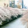 日本で一番美しい桜が見れる場所はどこでしょうか?