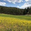 中山高原、2017年は菜の花は少なめだけど、幻の池も北アルプスも絶景だよ。