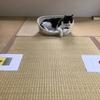 【エムPの昨日夢叶(ゆめかな)】第857回 『幸せを呼ぶ!予想ネコ「レフ」くん。セネガル戦も日本勝利を予想した夢叶なのだ!?』[6月23日]