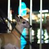 ✿金の神戸夜散歩