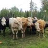 Monで子牛が生まれました!
