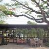 マンゴスイーツ、いただきます!@火炎樹の木の下のカフェで。