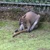 猛暑でコロナの夏休みに動物園に行きました