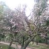 (巻二十一)「前年比」に追わるる夫木の芽季(小高沙羅)