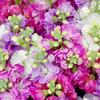 東海フラワーショウのいっぱいの花