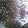 春がやってきた