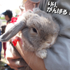 2010春のうさんぽ会 in 水元公園 《後編》