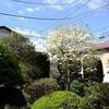 春の花々(3)