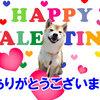 今年の初投げとHappy バレンタイン