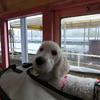南アルプスあぷとラインに、ミデイくん、乗りました