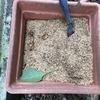 ミミズがあまりいなかったモミガラ堆肥