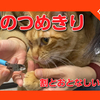 【猫の爪切りをしました。割と大人しい猫編 】Cut the cat's claws