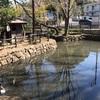 港北区に今なお伝わる「いのちの池」を訪れてみた(前篇・「い」の池編)