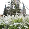 白い花ゆらゆら