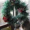 クリスマスだ!やっほい。