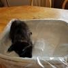 粉塵の少ない猫砂、安心安全な猫砂