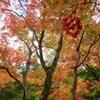 紅葉フェチも満足!!「滝野すずらん丘陵公園」ラン