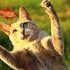 【狩猟免許】目指せ!狩りガール・わな猟免許試験申し込み