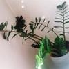 植物に名前を付ける。~剛、アロ美、潤子、サボ3兄弟~