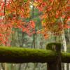 雨の広島県緑化センタ散歩