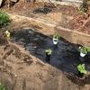 果菜類の定植