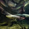 美の巨大魚たち