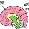 PTSD(トラウマ)の人は「爬虫類脳」が活性化している状態である