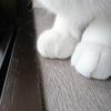 今日の黒猫モモ&白黒猫ナナの動画ー1045