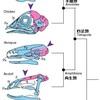 脊椎動物―『あたま』の出自