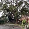 遠州森宿に宿る神木〜その2 金守神社