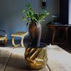 「Pachypodium Succulentum」