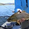 マスを釣る方法-初心者必見