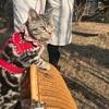 のんびり日曜日♪ 猫とお散歩してると珍しがられます~