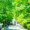 新緑の京都 二尊院