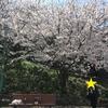 『桜とネコと息子』そして離任式・・・