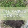 クラピアを植える時、土が重要だと気づいた話し