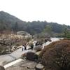 梅まつり5(山口県光市、冠山総合公園)