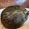 猫も低温やけどってするの?冬に気をつけるべき5つの事