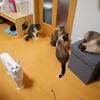 福井市の猫カフェ「福ねこ」に行ってきた