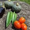 夏野菜、空心菜、カナー菜