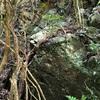 ammonite アンモナイトを探しに行きました ゴールデンウィークのレジャー 異常巻きアンモナイト ヘテロセラスか? #徳島県 #白亜紀 #化石採集 #アウトドア