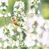 ハチ除けには「木酢液」がいいと蜂駆除業者の方に教えてもらいました