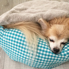 犬の腎臓病~皮下点滴通院中~
