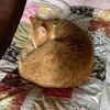 猫のように寝ていたい