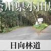 【動画】神奈川県小田原市 林道 日向線