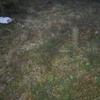業者に頼んで庭に人工芝をはってみた。お値段はいくら?風情ないけど仕事は減りました