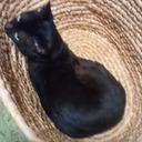黒猫クックブック