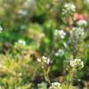 春の野の花たちいっぱい。~中編